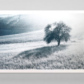 Black and white photograph of a lonely tree